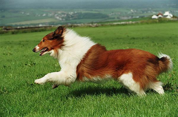 Lassie (17 - 27.07.2006)