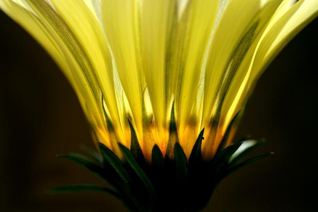Kwiaty ElFoto