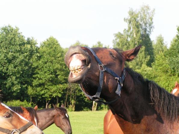 Koń by się uśmiał!